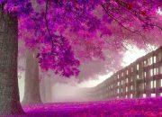 Mùa thu nao lòng ở 15 con đường đẹp nhất thế giới