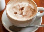 Giới trẻ 'điên cuồng' vì 12 bức hình chứng minh Latte không phải để uống!